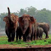 Indie: Stado słoni wdarło się na stadion